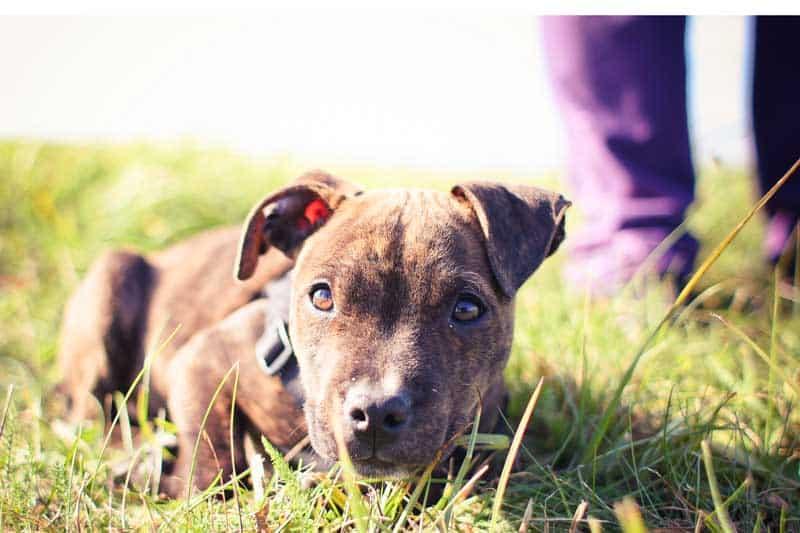 hundehaftpflicht